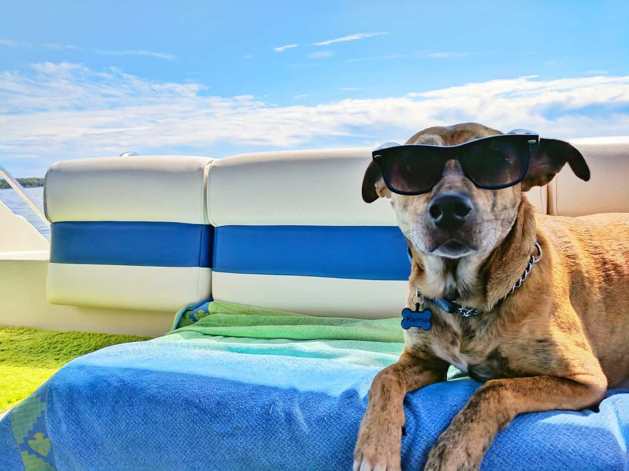 Dog on vacation in glasses airline approved pet carrier